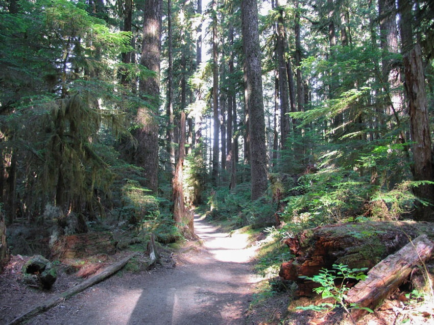 Sample trail conditions along the forest floor