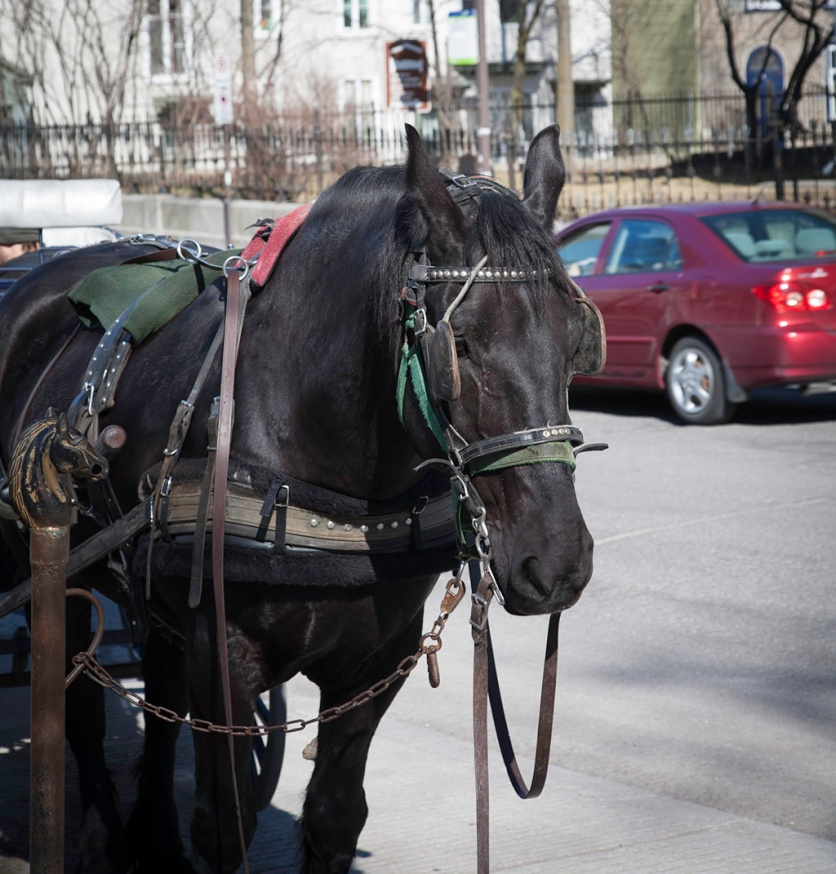 Waiting for a fare on rue St-Louis