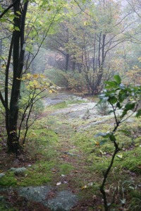 An unmarked, faint path