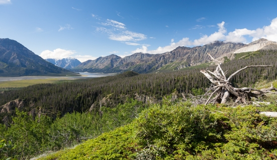 Sheep Creek Trail: Views of the Slims River valley
