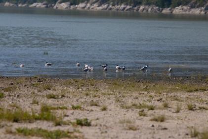 Dyea Tidal Flats