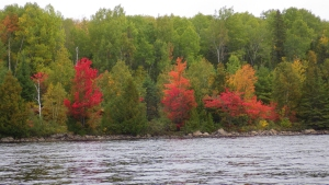 Algonquin Park: Cedar Lake to Laurel Lake