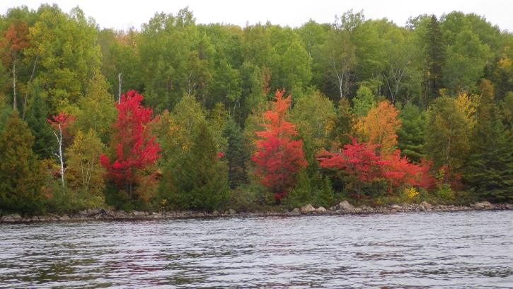 Shoreline on Cedar Lake