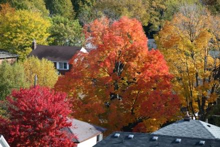 Neighbourhood fall foliage