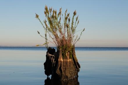 Lake Maurepas