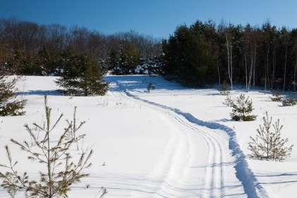 Set track on the Freeland Trail