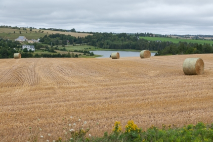 Farm in the New Glasgow area